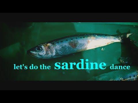 Durban's sardine song and dance