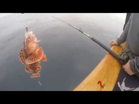 Sculpin, Jack, And Perch Fun On The Freelance | Davey's Locker Sport Fishing