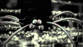 Bittersweet / Hatching Mayflies - the HIATUS