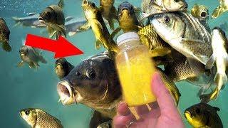 УБИЙЦА КАРПА за 1 МИНУТУ Новый аттрактант клубника добавка в прикормку для ловли мирной рыбы
