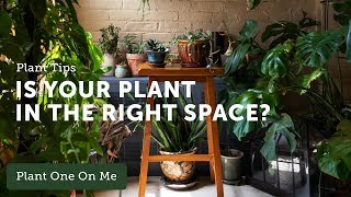 Houseplant 101: What Plant is Right for My Space? - Ep 116