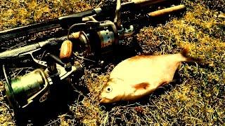 РЫБАЛКА НА РЕКЕ. Ловля на фидер [Дневник Брюса](Что может быть лучше, чем рыбалка на реке, где никогда не знаешь поймаешь ты рыбу или нет. В данном видео..., 2016-08-02T12:05:34.000Z)