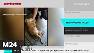 Сочинские таможенники помешали незаконному вывозу львенка за границу - Москва 24
