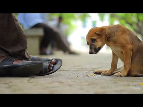 Sama-bhava   Short Film On Emotion L Subscribe Us