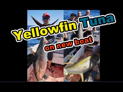 Yellowfin Tuna Off Sydney