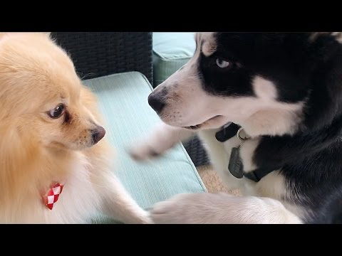 THEY DONT LIKE THE NEW PUPPY