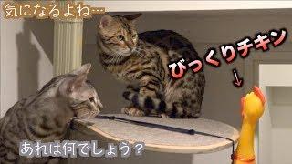 猫たちにびっくりチキンを渡すとこうなる