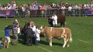 Pencampwriaeth Biff Unigol | Individual Beef Championship