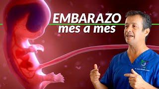 Embarazo mes a mes [Fecundación y desarrollo de embrión a feto, y a bebé]