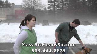 Massachusetts Dog Obedience Training