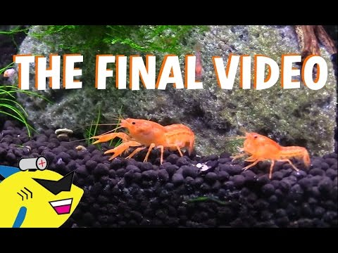 WHAT HAVE I DONE!? - THE FINAL CRAYFISH VIDEO (Sad, But I Learned)