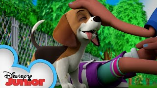 Tully's Troublesome Trainee | The Chicken Squad | @Disney Junior