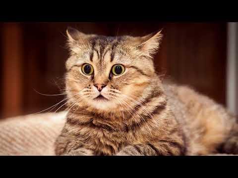 Вопрос: В каком возрасте коты перестают гулять?