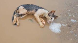 죽기 직전의 고양이를 발견한 한 남자의 행동