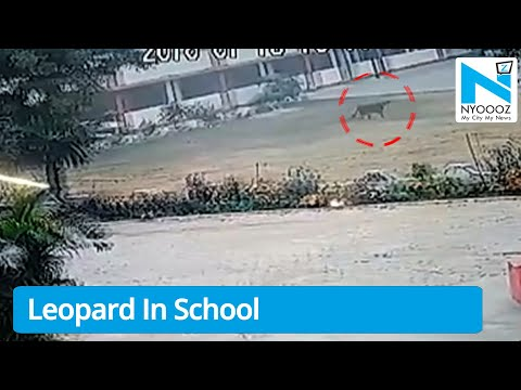 Leopard enters Lucknow school Caught on Camera