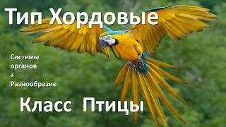 15.2 Птицы часть II (7 класс) - биология, подготовка к ЕГЭ и ОГЭ 2018