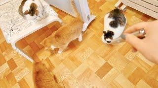 最先端のねこじゃらし!?遊び狂う4匹の猫