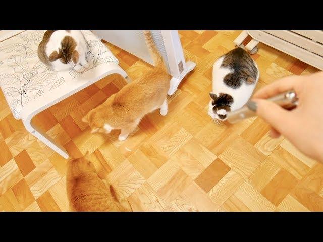 レーザーポインターで遊び狂う猫4匹