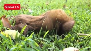 Den här sengångaren vill mörda dig