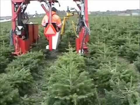 formklipning af juletræer