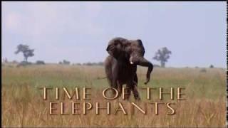 Time of the Elephants