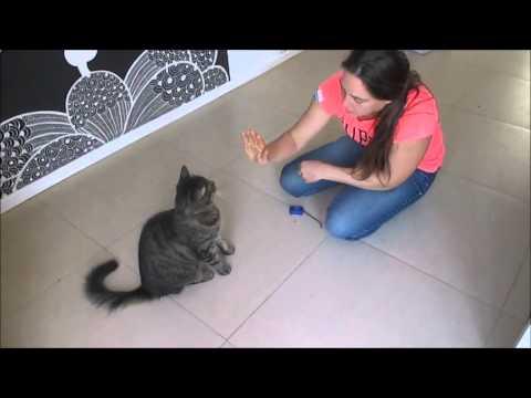 singer smart cat