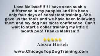 Chicago Top Dog Training | 5 Star Reviews | Off Leash K9 Training