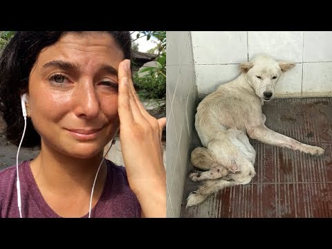 The Dog I Rescued in Bali. Watch This Video.