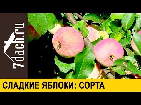 �� Сладкие яблоки: как выбрать правильный сорт 7 дач
