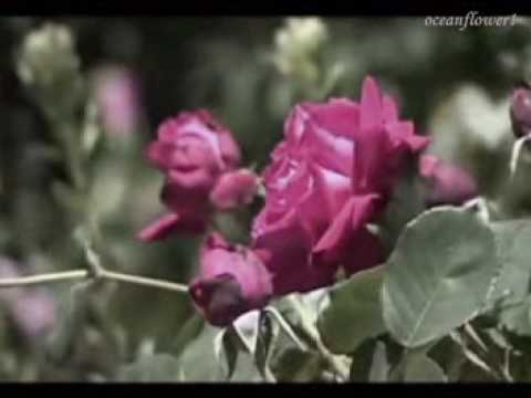 ERNESTO CORTAZAR -  Hidden love