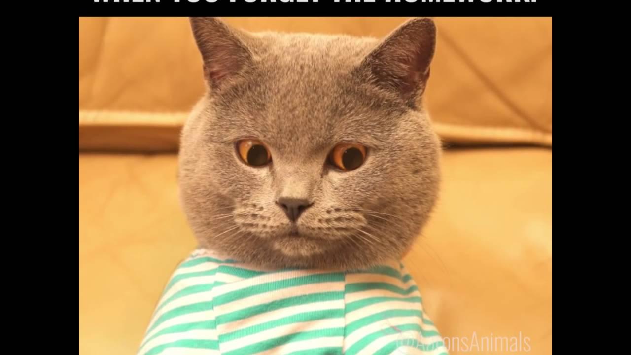 Gatto che lavora nel computer youtube for Immagini divertenti desktop