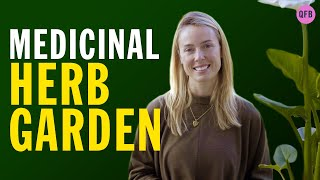 How To Start A MEDICINAL HERB GARDEN | Medicinal Herbs Year Round | Indoor Herb Garden For Beginners