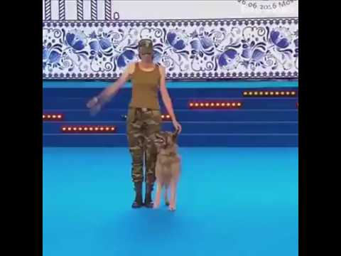 A perfect dog trained military action talent show. Pets Playhouse Kennel.