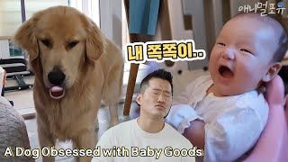 A Dog Obsessed with Baby Goods [Dogs Are Incredible]