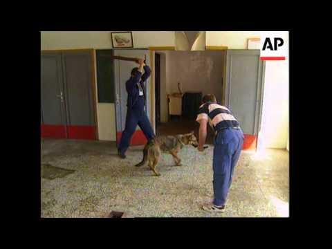 BOSNIA: SARAJEVO: STRAY DOGS BECOME MAJOR THREAT TO PUBLIC HEALTH