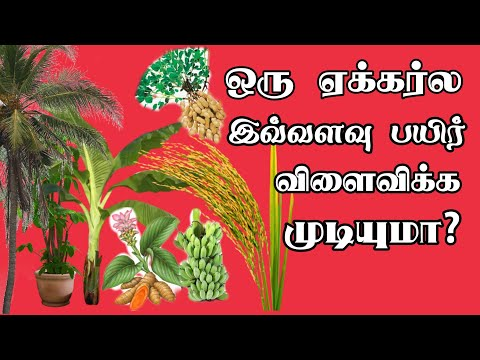 How many plants can plant in 1 acre of agricultural land| Agricultural Videos | Tamil culture