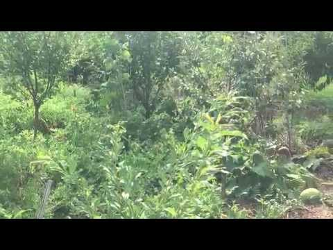 Food Forest, Part 1