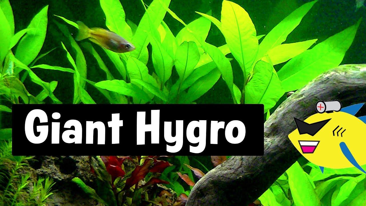 how to make aquarium plants grow faster