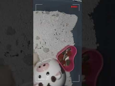 Chuột Hamster|Bao Nhiêu Tiền Là mua đủ cho 2 bé hamster?