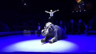 Аттракцион «Индийские слоны» п/р семьи Гертнер, Германия