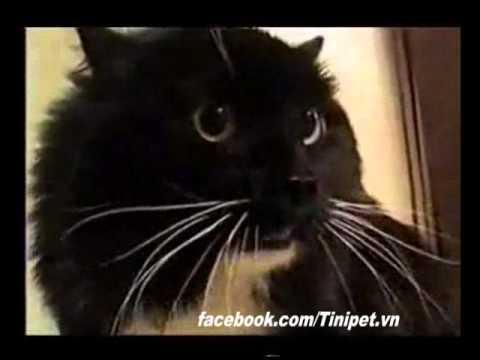 Mèo biết nói tiếng Anh