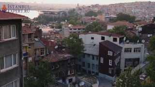 Город Стамбул. Каким его видят стамбульские коты?