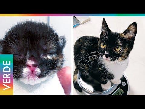 Gatito ocultaba terrible deformidad en el paladar