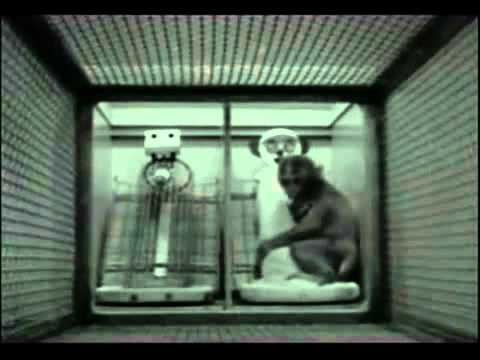 Harlow's Rhesus Monkey Experiments and the Meaning of Love ...