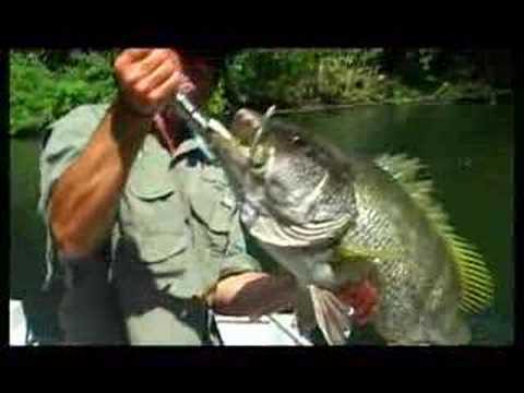 Baia Sport-fishing Lodge Papua New Guinea