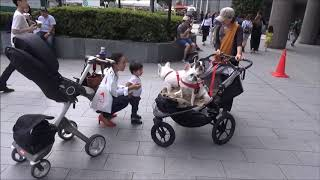 http://dogstroller.jp/ 11歳いじょうの老犬や多頭犬と散歩するためのお...