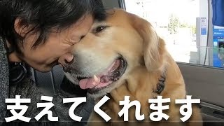 ありがとうハロ:仕事に付いてきてくれる愛犬
