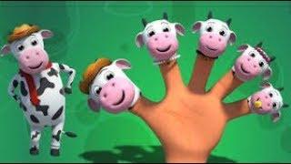 Dedo vaca da família canção  canções de ninar para crianças - Canal Kids