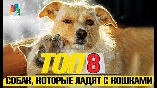 Топ 8 собак, которые любят кошек |Top 8 dogs that love cats