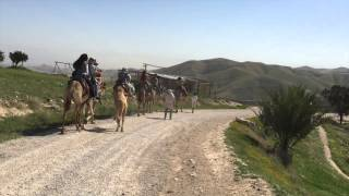 Visit Israel Camel Caravan judean desert